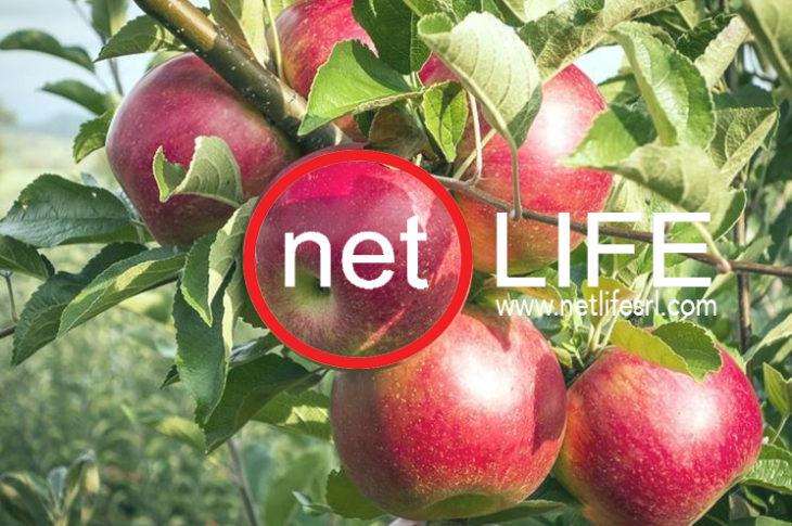 comunicare la sostenibilità con netlife s.r.l.